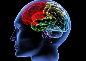 Alimlər beyinlə bağlı yeni faktlar açıqlayıb