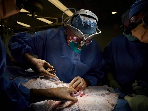 """AMEA-nın müxbir üzvü Nuru Bayramov: """"İnsana geni dəyişdirilmiş donuz böyrəklərinin köçürülməsi transplantasiyada yeni eranın başlanğıcıdır"""""""