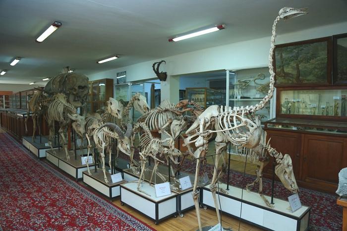 """Təbiət Tarixi Muzeyinin baş direktoru: """"Muzeydə saxlanılan ən qədim paleontoloji materialların yaşı 350-400 milyon ili əhatə edir"""""""